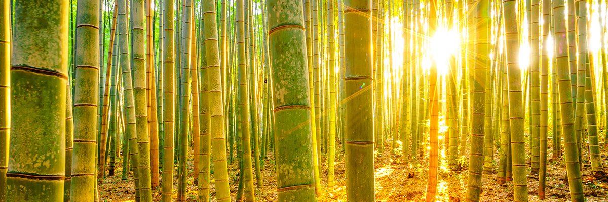 bambu ile ilgili görsel sonucu